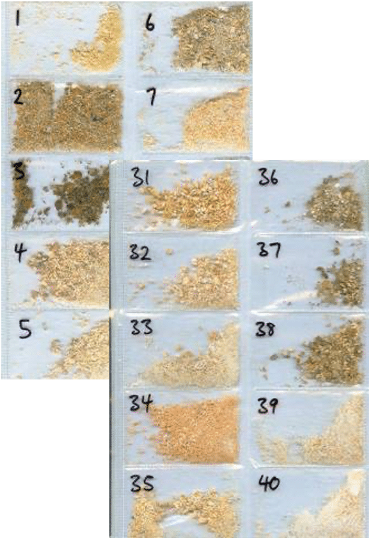 Timber Samples Showing Decay Levels for Property Managers